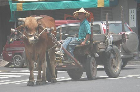 photo of man riding in a cart pulled down a Tainan County city street by a cow
